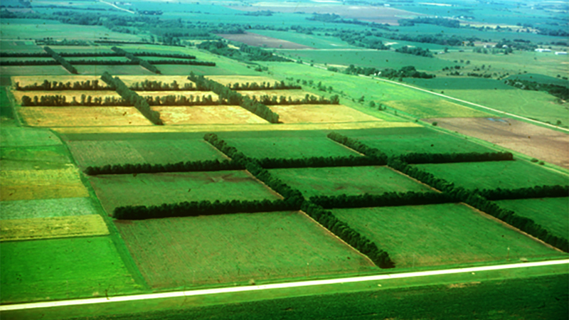 Windbreaks-Shelterbelts - ARDC Agroforestry Farm
